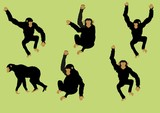 Black monkey set in different poses vector image