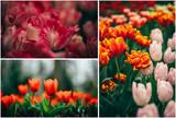 beautiful tulips for international woman day