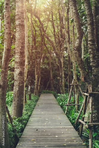 Fototapeta Wooden path in the garden