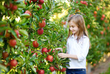 Fototapety Cute little girl picking apples in apple tree orchard