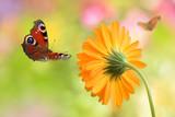 Schmetterling 238
