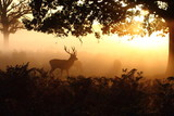 Red deer silhouettes.