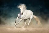 White horse run forward in dust on dark background - 135476995