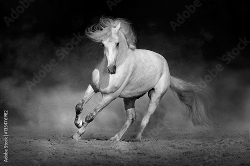 Obraz Fotograficzny Horse in motion in desert against dramatic dark background. Black and white picture