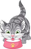 Kitten Drinks Milk