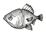 fish redfish cartoon sketch