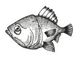fish redfish cartoon sketch