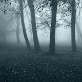 Cold fog spreads in the early morning through the autumn forest