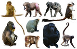 set of primates