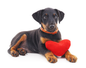 Dog with heart.