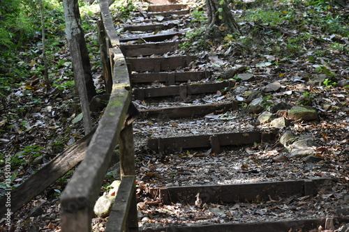 Tuinposter Weg in bos Escalones del Bosque