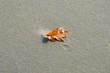 Single Leaf on the Beach