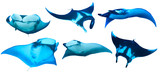 Manta Ray isolated white background