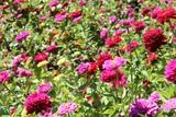 Filoli garden - pink flowers