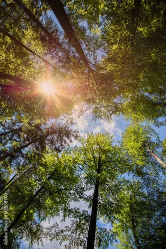 Forêt majestueuse avec rayons de soleil