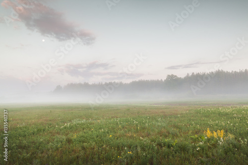 Poster Foggy sunrise   in the meadow