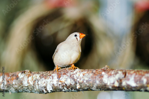 Poster Wild bird sitting on a perch.