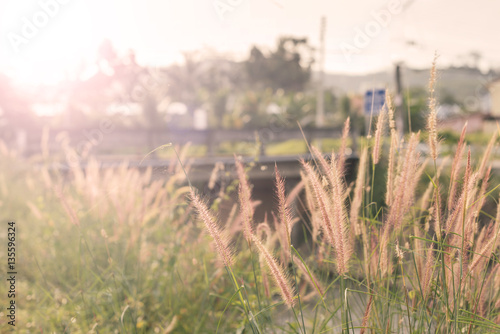 Abstract : Blur, Dried grass in the morning, soft focus, warm fall color. © ichz