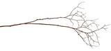 Dry twig - 135611360
