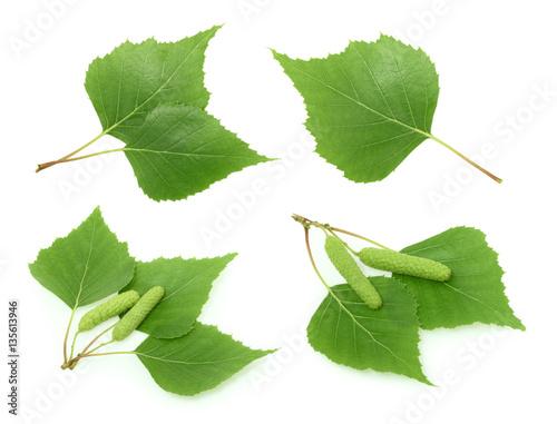 Fototapeta Birch leaves isolated. set