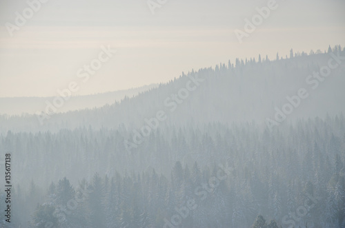 coniferous trees, thickets of green forest - 135617138