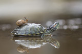 snake, animals, wildlife, macro, animal, animal wildlife, reptiles, amphibians, mammal, nature, crocodile, snail, close up, turtle, turtles,