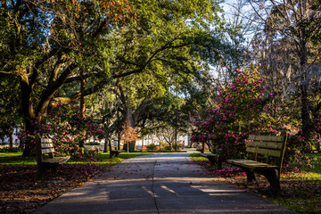 A Warm day at Forsyth Park in Savannah, Georgia Shaded by Magnol © Christian Hinkle