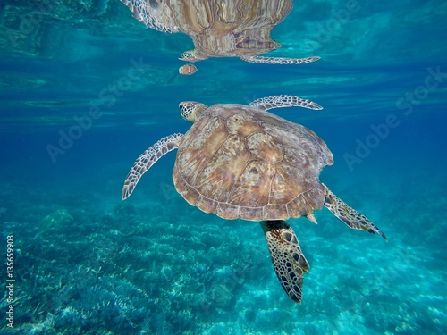 Poster turtle_new_caledonia