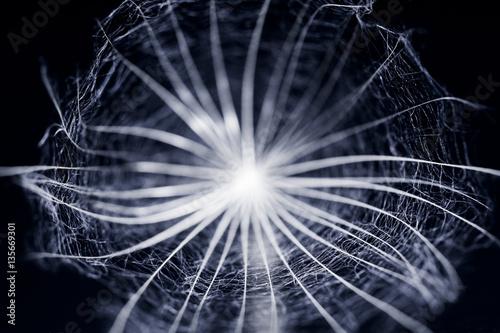 Plexiglas Paardebloemen Dandelion seed with details and reflexion on black background
