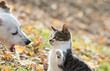 Cute jack russel dog and kitten best friends