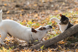 Cute jack russel dog and kitten best friends