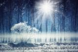 foresta con brina e raggi di sole