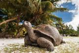 Seychelles. Giant tortoise on Curieuse Island