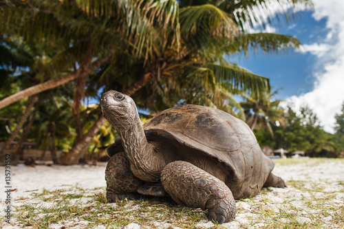 Seychelles. Giant tortoise on Curieuse Island
