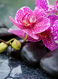Zen basalt stones and orchid .