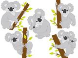 Vector Koala Set