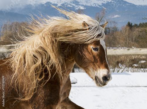 Beautiful horse  on snow