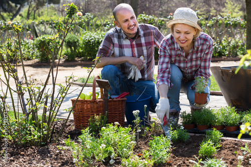 Elderly positive couple engaged in gardening Poster