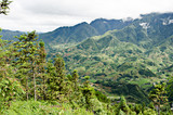 Jungle treks outside the northern Vietnam town of Sapa