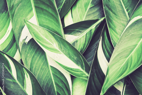 Foto Murales Fresh tropical Green leaves background