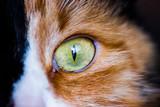 Cat eye.Macro shoot