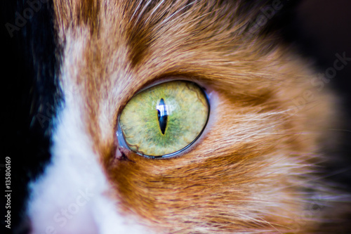 Foto op Aluminium Panter Cat eye.Macro shoot