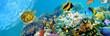 Balıklar ve Deniz Panoramik