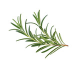 Rosemary isolated on white background, Top view. - 135817986