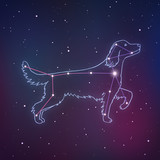 Vector illustration of Canis Major. Dog constalletion hand-drawn background. Astrology picture with stars on space gradient background.