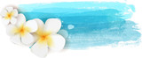 Fototapety Plumeria on watercolor banner