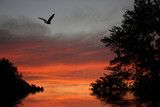 American Bald Eagle fliying over water and sunset sky