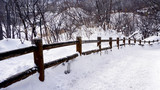 Snow and curved walkway in the forest Noboribetsu onsen winter