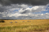 Savannah landscape in the National park in Kenya