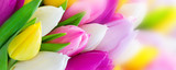 Tulips - 135928937